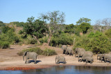 Elephants walking along the Chobe River