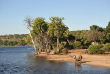 Chobe River with elephants, Chobe National Park