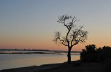 Early morning, Chobe River