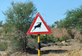 Jumping kudu, the standard southern African wildlife crossing sign
