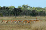 Wildlife can be a real hazard at bush strips like this