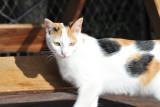 Cat at Camp Kwando