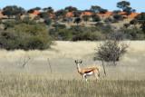 Springbok, Farm Olifantwater West, Namibia
