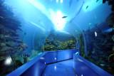 Tunnel - Sharjah Aquarium