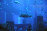 Aquarium themed after the Lost City of Atlantis
