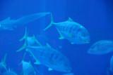 Aquarium - Atlantis, the Palm