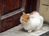Medina Cat with Tinker's coloring