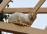 Medina cat on a wooden scaffolding supporting old houses