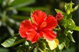 Flower, Paradise Island