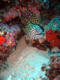MaldivesNov05 019.JPG