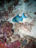 MaldivesNov05 333.JPG