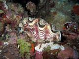 MaldivesNov05 359.JPG