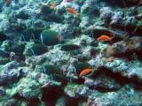 MaldivesNov05 374.JPG
