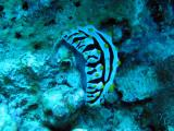 MaldivesNov05 452.JPG