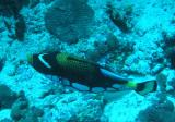 MaldivesNov05 470.JPG