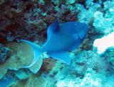 MaldivesNov05 472.JPG