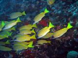 MaldivesNov05 494.JPG