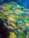 MaldivesNov05 497.JPG