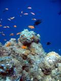 MaldivesNov05 550.JPG