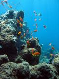 MaldivesNov05 554.JPG
