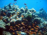MaldivesNov05 562.JPG