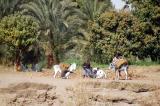 Donkeys loaded up along the river