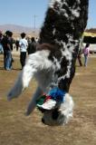 An unlucky lamb