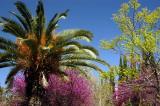 Bagh-e Eram garden, Shiraz
