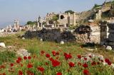 Spring flowers blooming near the upper (southeast) entrance to Ephesus