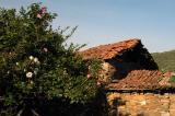 Red-tiled roof, Şirince