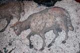 Ram, Great Palace Mosaic Museum