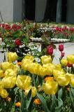 Tulips, a favorite of Ahmed III
