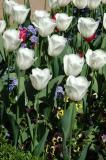 Tulip Garden, Fourth Court