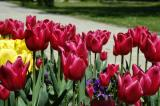 Tulips, Topkapi Palace. The reign of Sultan Ahmet III was known as the Tulip Age