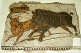 A dog attacks a wild boar (sanglier) Sousse, 2nd C. AD