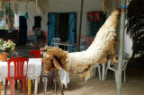 Meat served in rural Tunisian restaurants is VERY fresh