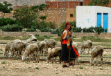 Woman herding sheep along the railway, Thelepte, Tunisia