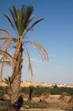 Palm tree & blue sky, Nefta