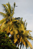 Palm trees along the harbor, Dar es Salaam
