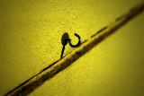 toxic hook