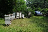Apiary in summer