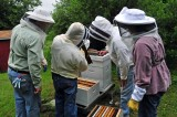 Checking some of the club hives