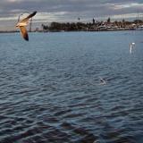 Cruising the Intra-Coastal Waterway