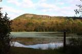 Waterfowl Pond