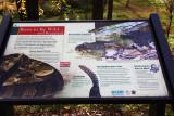 Rattlesnake Info Sign