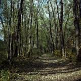Loop Trail in Woods