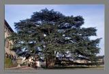 Lovely Tree...