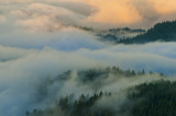 The Fog is in the Fir Trees... Sub-gallery