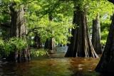 Lake Caddo Louisiana -kayaking
