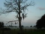 Foggy Fulshear